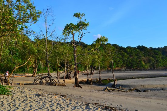 Do you ever at Chidiya Tapu Andamans: Bird Watching