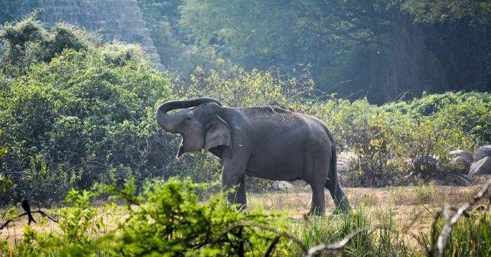 17 Zoos In India One Must Definitely Visit And Enjoy A Great Time In 2020!