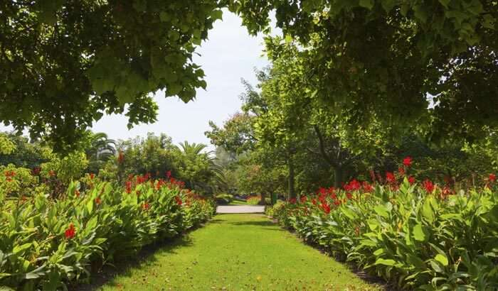 Lush greenery and colorful flowers at Saramsa Garden in Gangtok