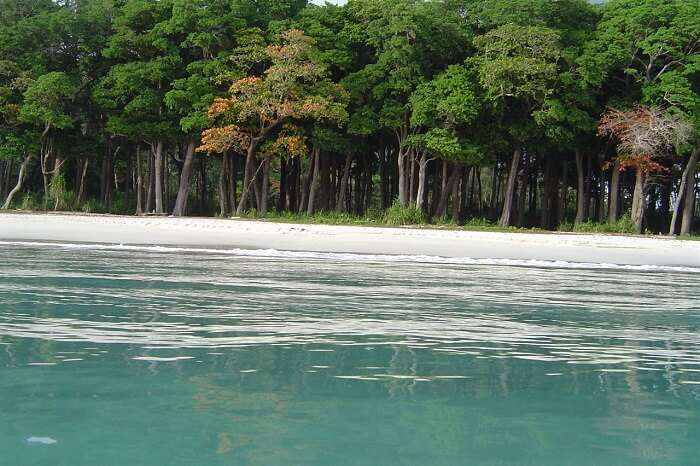 The clear waters and tropical vegetation at the Karmatang Beach in Andaman