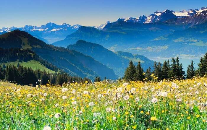 Beautiful flowers and parks of nature