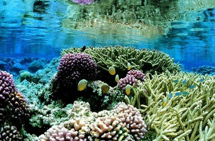 Coral reef gardens
