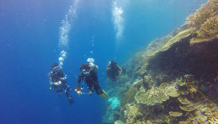 All About Your Next Thrilling Dive!