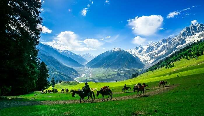 Tourists riding ponies in the valley of Sonamarg