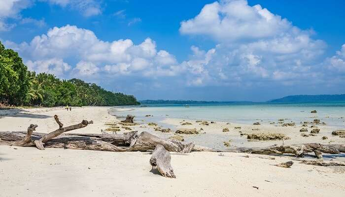 Fallen logs of trees on the clear sands of the Vijaynagar beach at Havelock island