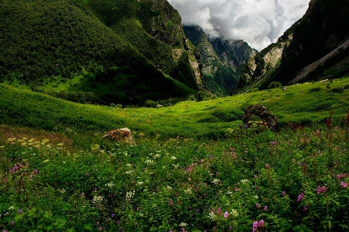 The lush valley and the flowers blooming in it