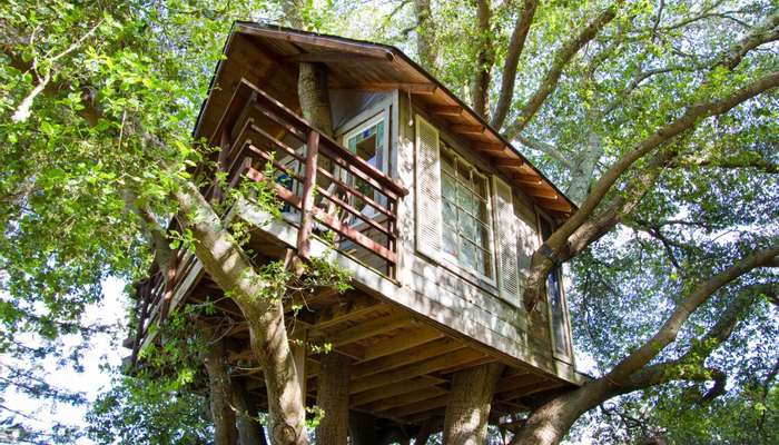 An exterior view of treehouse above San Francisco Bay in Burlingame