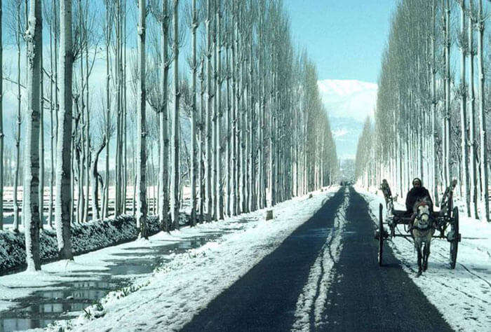 The splendid view of Gulmarg to Sonmarg